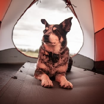 camping animaux acceptes